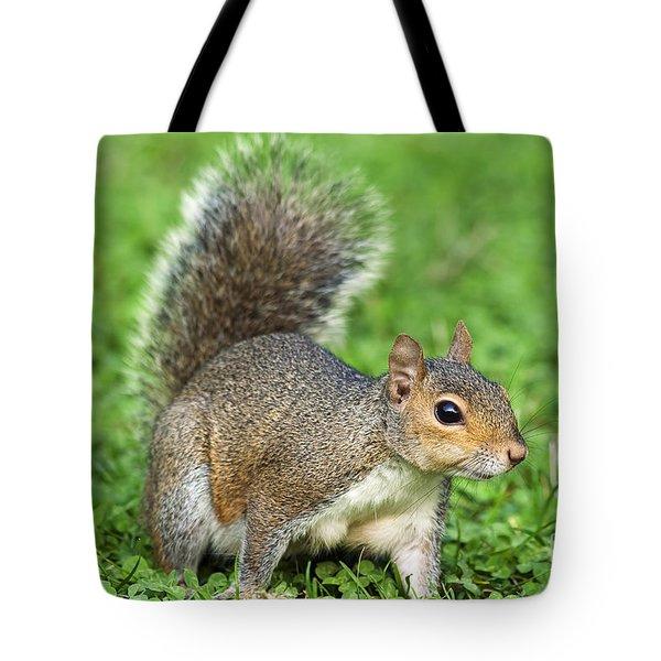 Tote Bag featuring the photograph Grey Squirrel by Antonio Scarpi
