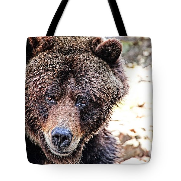 Grizz Tote Bag by Karol Livote