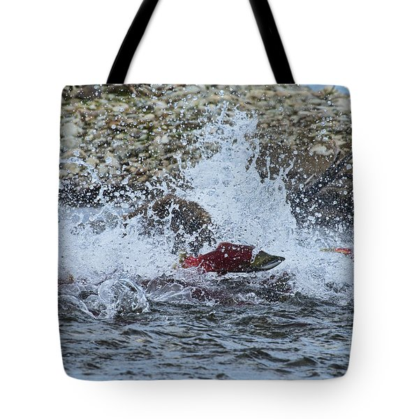 Brown Bear Chasing Salmon While Salmon Jump To Escape Tote Bag by Dan Friend