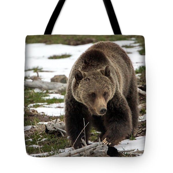 Tote Bag featuring the photograph Grizzly Bear In Spring by Jack Bell