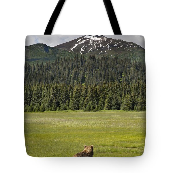Grizzly Bear Mother And Cubs In Meadow Tote Bag