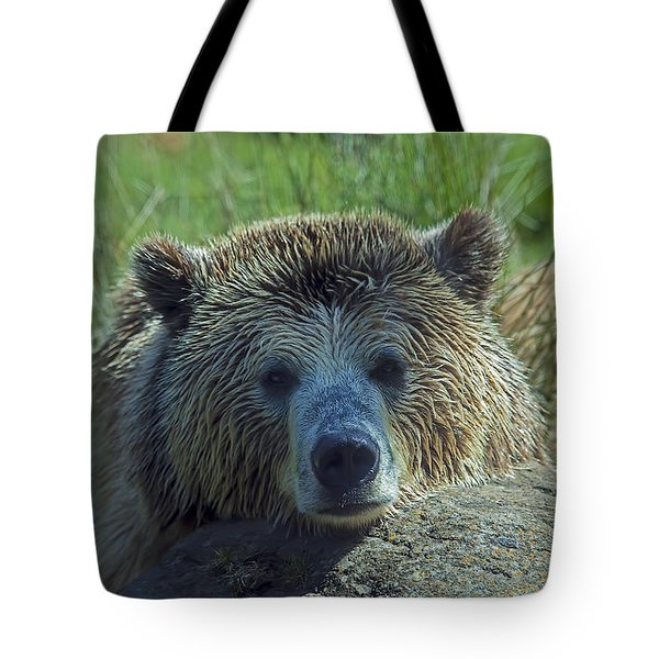 Grizzly Bear Resting Tote Bag by Garry Gay