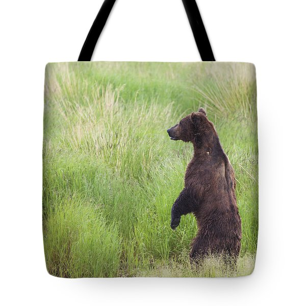 Grizzly Bear Ursus Arctos Standing Tote Bag by Lucas Payne