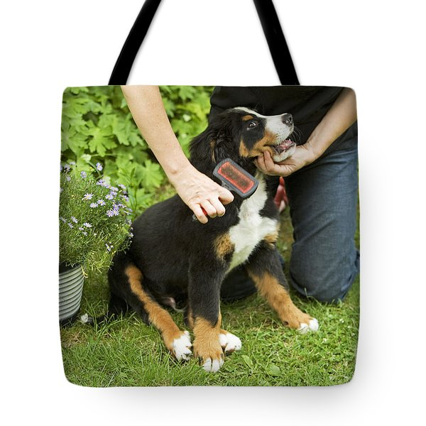 Grooming Bernese Mountain Puppy Tote Bag by Jean-Michel Labat