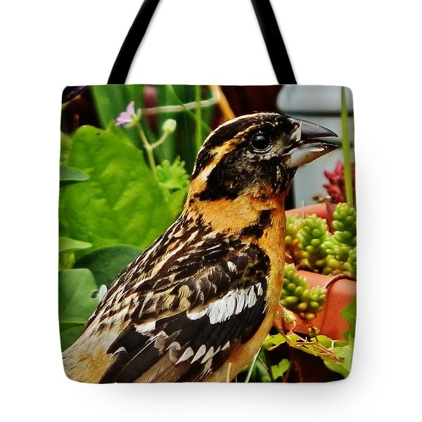 Tote Bag featuring the photograph Grosbeak Profile by VLee Watson