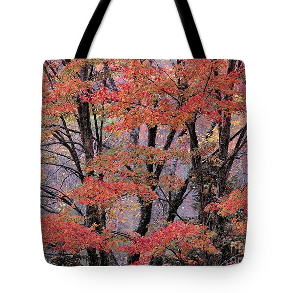 Groton Forest Maples Tote Bag by Alan L Graham