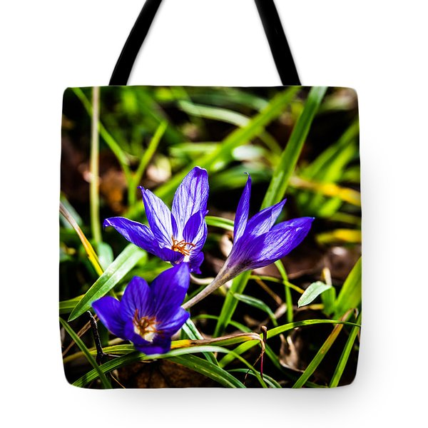 Tote Bag featuring the photograph Hocus Crocus by Dee Dee  Whittle