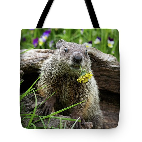 Groundhog  Kit Marmota Monax Tote Bag by Debbie Dicarlo