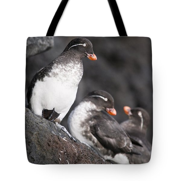 Group Of Parakeet Auklets, St. Paul Tote Bag by John Gibbens