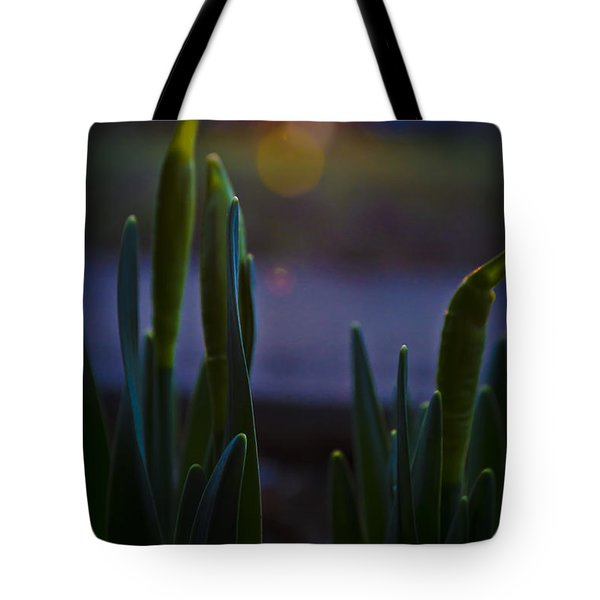 Growing In The Late Evening Sun Tote Bag
