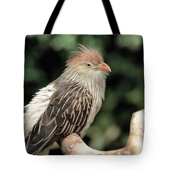 Guira Cuckoo Tote Bag