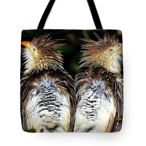 Guira Cuckoos Tote Bag by Lisa L Silva