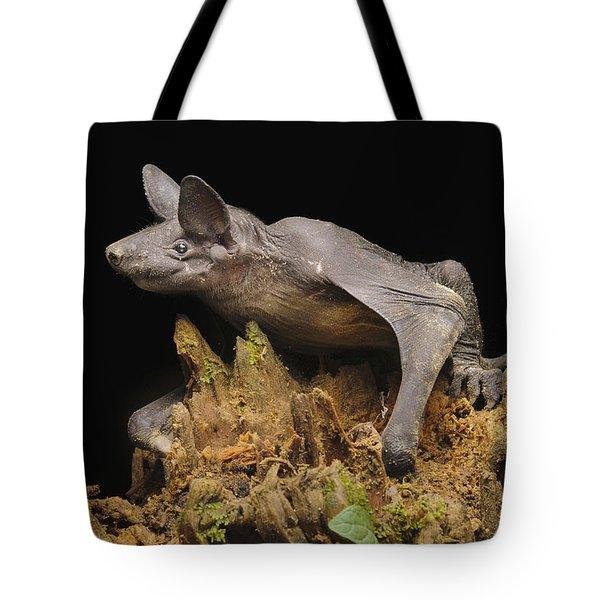 Hairless Bat Tibu Batang Ai Np Malaysia Tote Bag