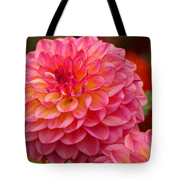 Tote Bag featuring the photograph Hamari Rose - Dahlia by Jordan Blackstone