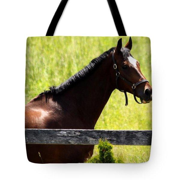 Handsom Horse Tote Bag