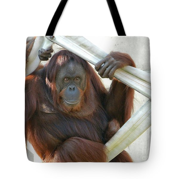Tote Bag featuring the photograph Hanging Out - Melati The Orangutan by Emmy Marie Vickers