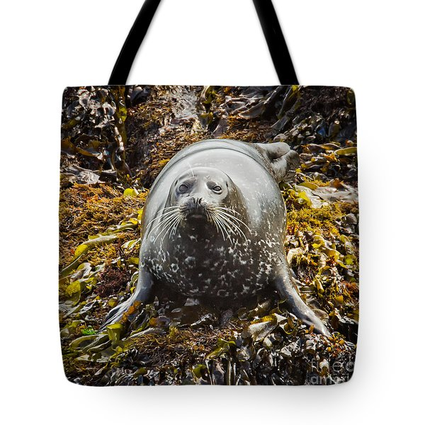 Harbor Seal Tote Bag by Alice Cahill