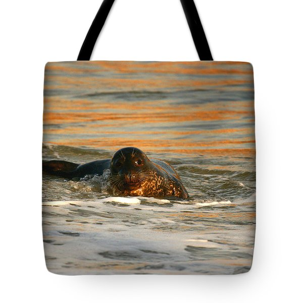 Tote Bag featuring the photograph La Jolla Seal Sunset by John F Tsumas
