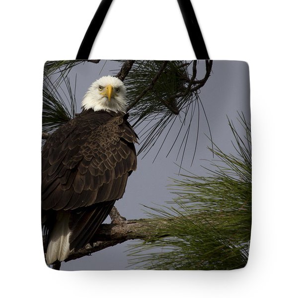 Harriet The Bald Eagle Tote Bag by Meg Rousher