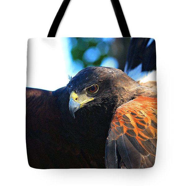 Harris Hawk - Close Up Tote Bag