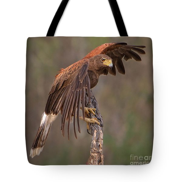 Harris's Hawk 1 Tote Bag by Jerry Fornarotto