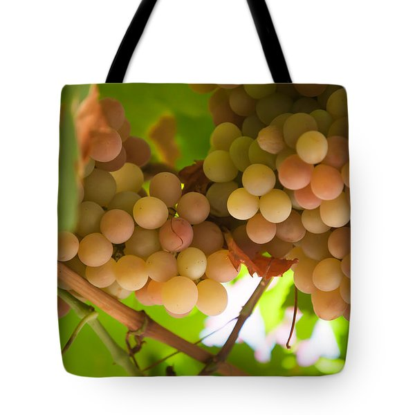 Harvest Time. Sunny Grapes II Tote Bag by Jenny Rainbow