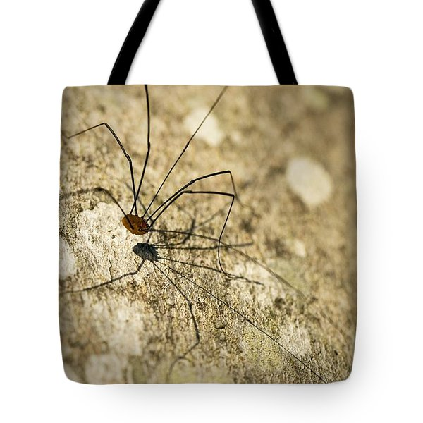 Tote Bag featuring the photograph Harvestman Spider by Chevy Fleet