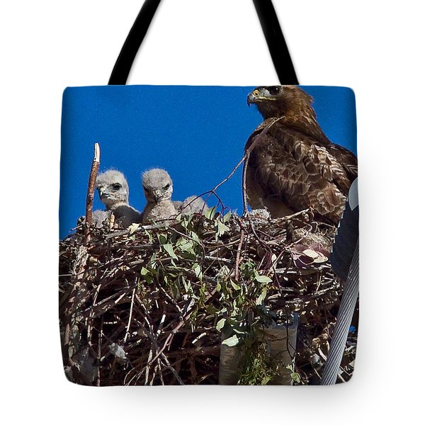 Tote Bag featuring the photograph Hawk Babies by Brian Williamson