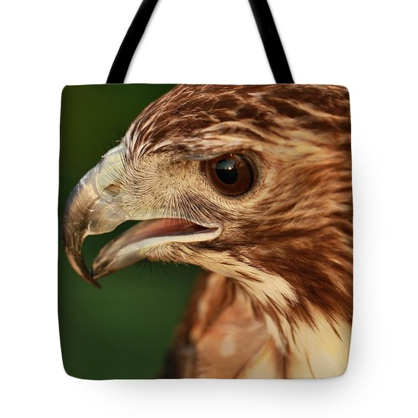 Hawk Eyes Tote Bag by Dan Sproul