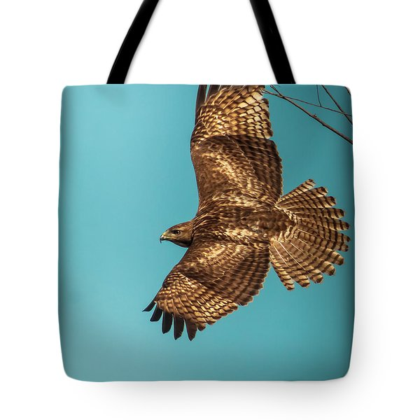 Hawk In Flight Tote Bag by Robert Frederick