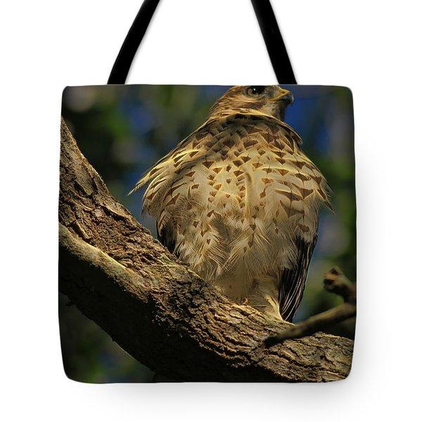Hawk In Soft Light Tote Bag by Deborah Benoit