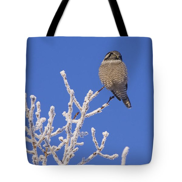 Hawk Owl Perched On Hoarfrosted Tote Bag