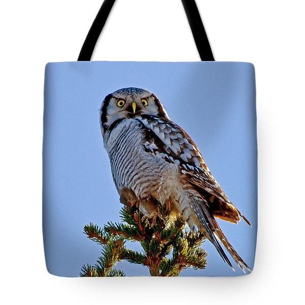 Hawk Owl Square Tote Bag by Torbjorn Swenelius