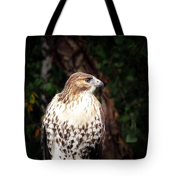 Tote Bag featuring the photograph Hawkeye by Greg Simmons