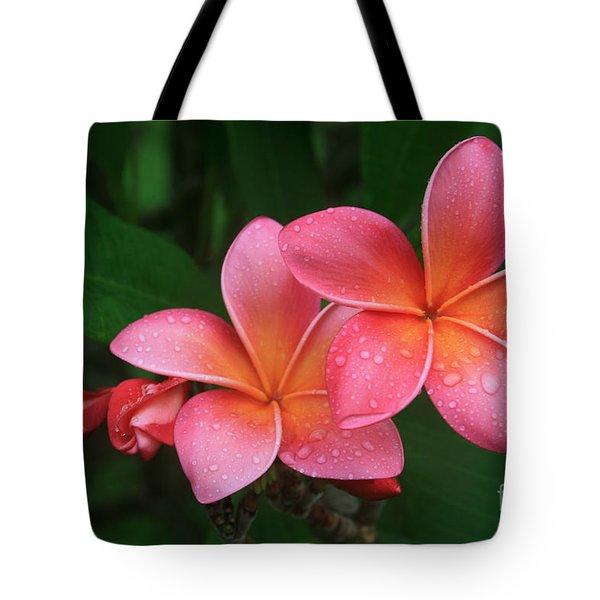He Pua Laha Ole Hau Oli Hau Oli Oli Pua Melia Hae Maui Hawaii Tropical Plumeria Tote Bag