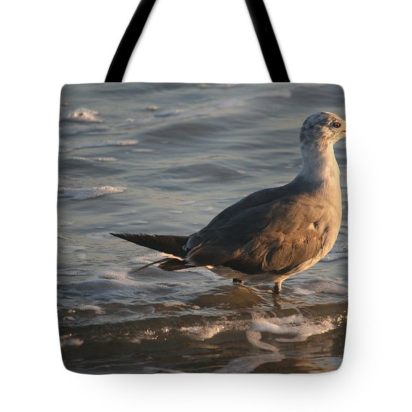 Heading Into The Late Afternoon Sun Tote Bag by Kathleen Scanlan