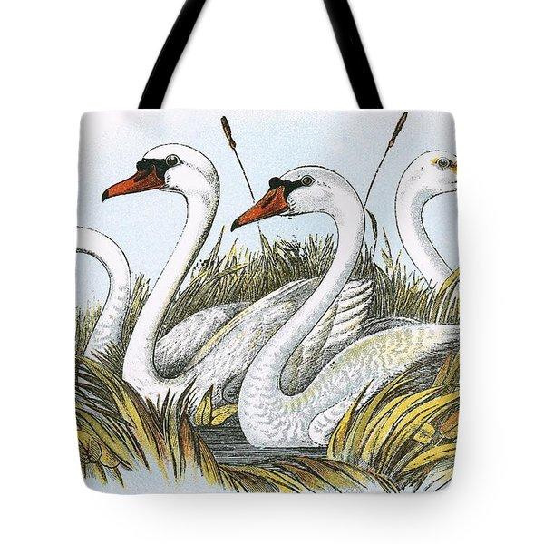 Heads Of Species Of British Swans Tote Bag