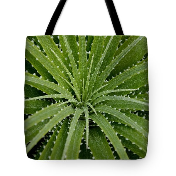 Tote Bag featuring the photograph Hechtia Argentea by Scott Lyons