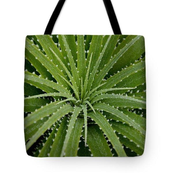Hechtia Argentea Tote Bag