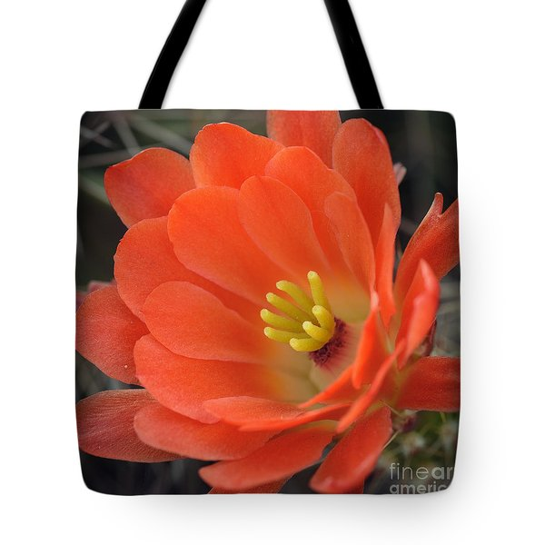 Hedgehog Cactus Flower Tote Bag