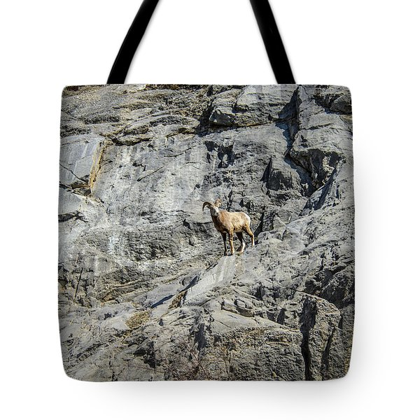 Big Horn Sheep Coming Down The Mountain  Tote Bag
