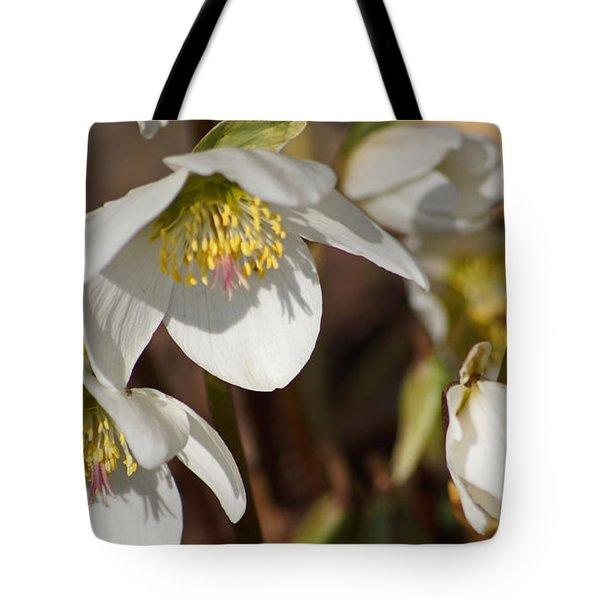 Helleborus Niger - Christrose Tote Bag