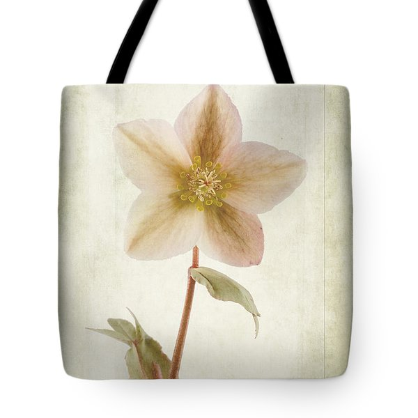 Helleborus Niger Tote Bag by John Edwards