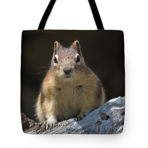 Tote Bag featuring the photograph Hello Chipmunk by Chris Scroggins