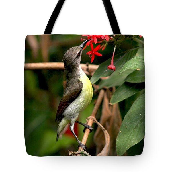 Her Highness - Purple Rumped Sunbird  Tote Bag by Ramabhadran Thirupattur