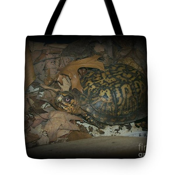 Tote Bag featuring the photograph Here's Looking At You by Sara  Raber