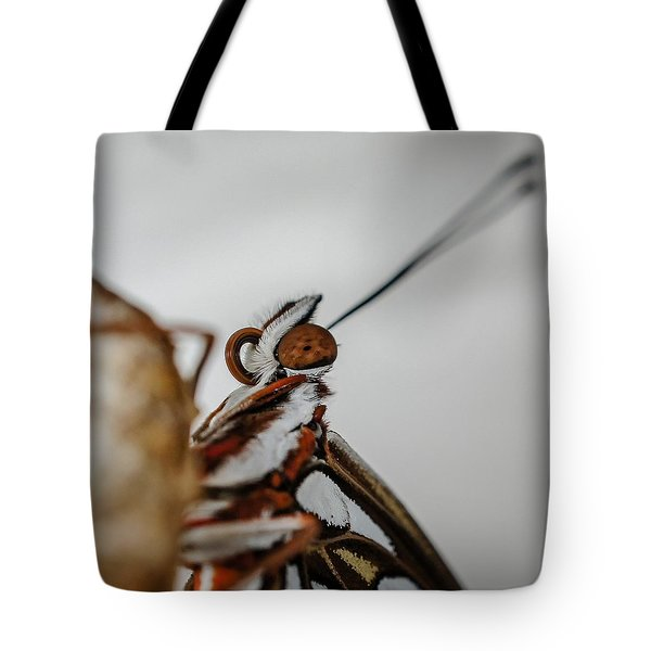 Here's Looking At You Squared Tote Bag by TK Goforth