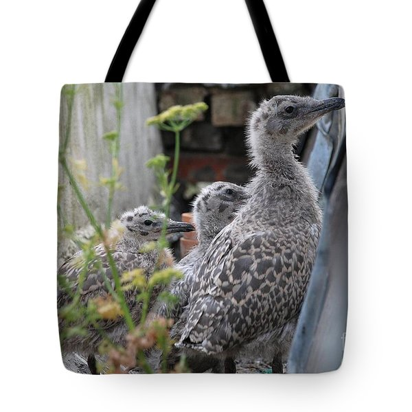 Herring Gull Chicks Tote Bag