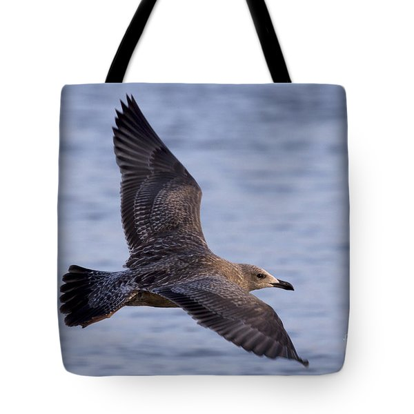 Tote Bag featuring the photograph Herring Gull In Flight Photo by Meg Rousher