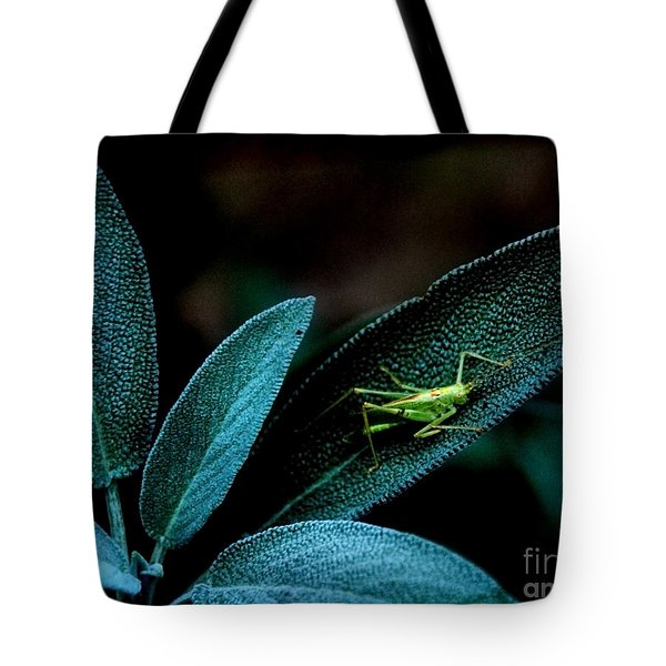 Tote Bag featuring the photograph Hey  I'm Trying To Hide by Debra Fedchin
